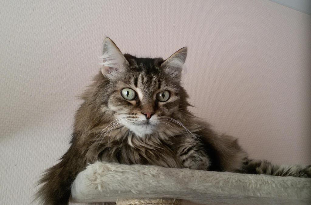 Шипа, 22 апреля 2016 (14 лет)